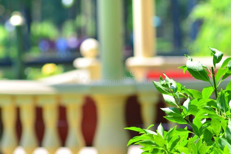 Красивая предпосылка парка лета стоковое фото rf