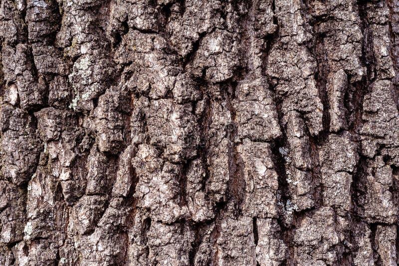 Красивая предпосылка текстуры расшивы коричневого дуба стоковые фотографии rf