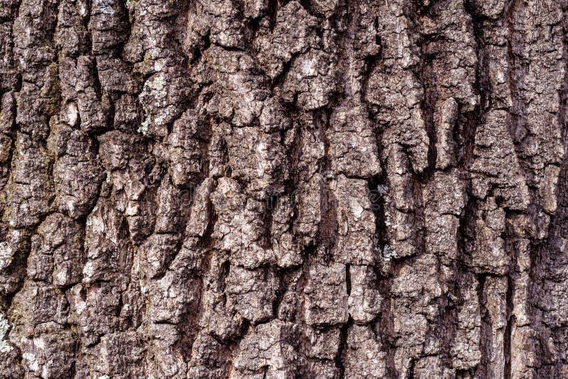 Красивая предпосылка текстуры расшивы коричневого дуба стоковое изображение rf