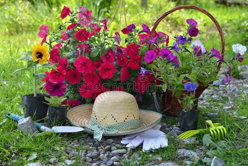 Красивая предпосылка лета с цветками, садовыми инструментами и соломенной шляпой стоковые фото