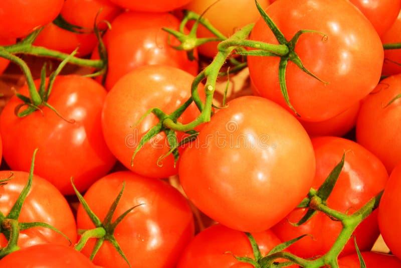 Красивая предпосылка томатов стоковое фото