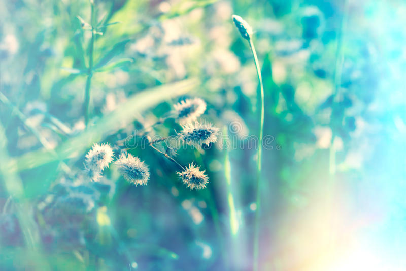 Красивая природа - сухие цветки в луге стоковые фотографии rf