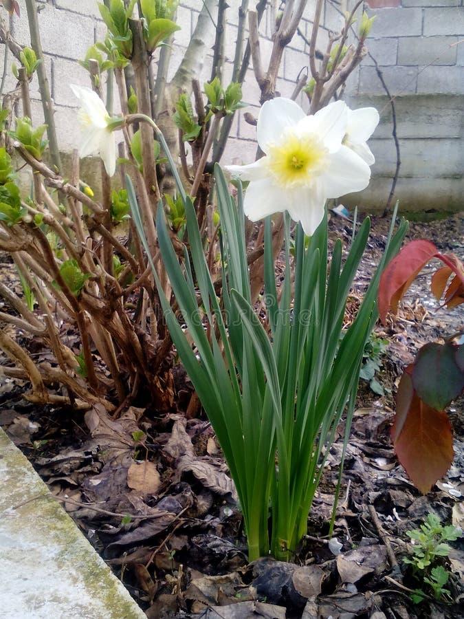 Красивая природа цветка стоковое изображение