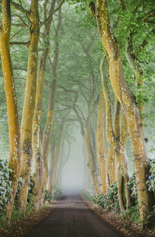 Красивая проселочная дорога в Азорских островах стоковое фото rf