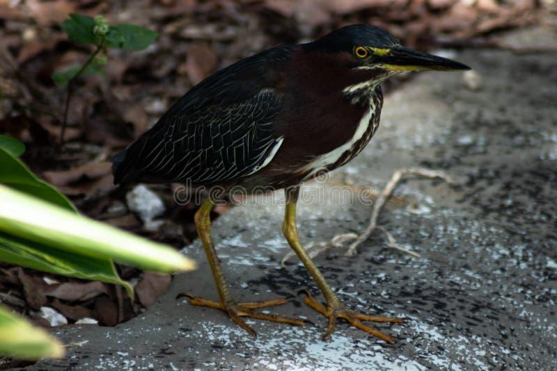 Красивая птица стоит на земле стоковые фото
