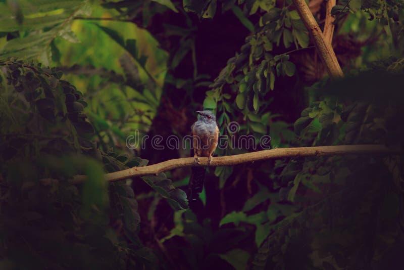 Красивая птица стоковые фото