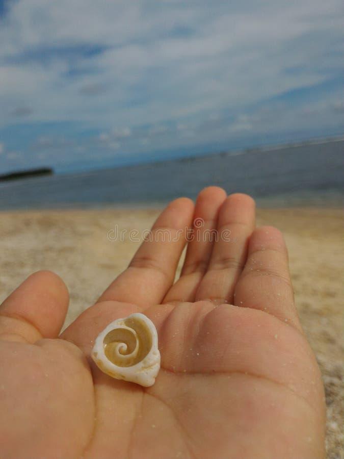 красивая раковина моря стоковое изображение rf