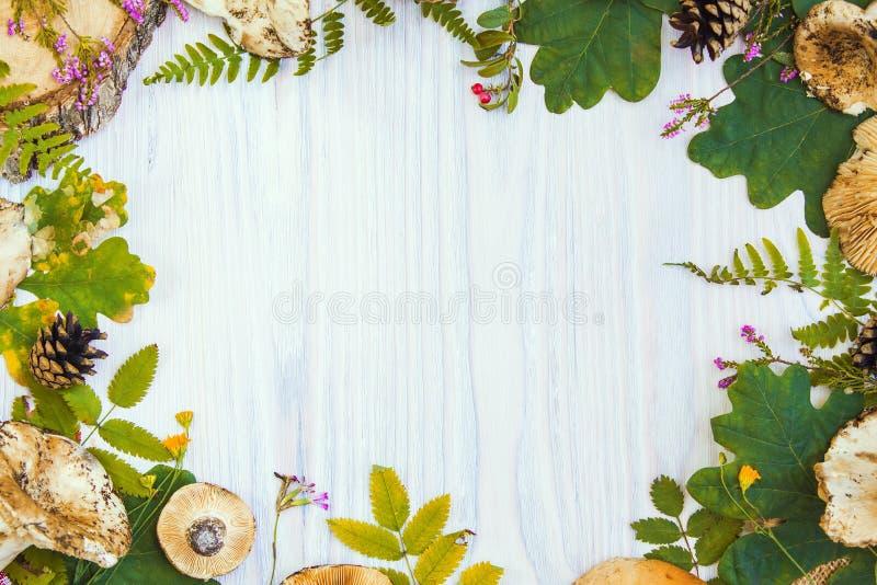 Красивая рамка естественных материалов, гриб, конусы, папоротник, ягоды Предпосылка осени белая деревянная стоковая фотография