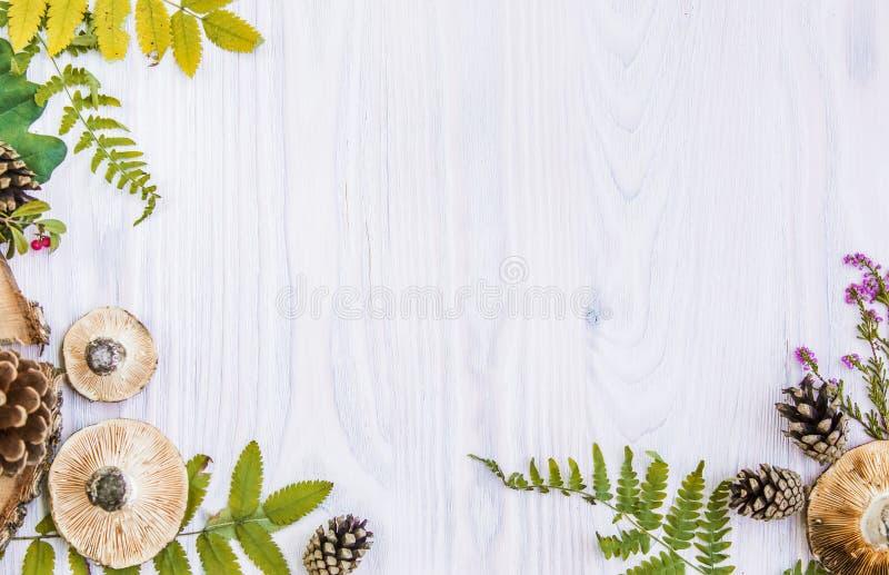 Красивая рамка естественных материалов, гриб, конусы, папоротник, ягоды Предпосылка осени белая деревянная стоковое фото rf