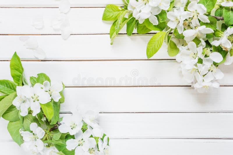 Красивая рамка с белым цветением яблока стоковая фотография