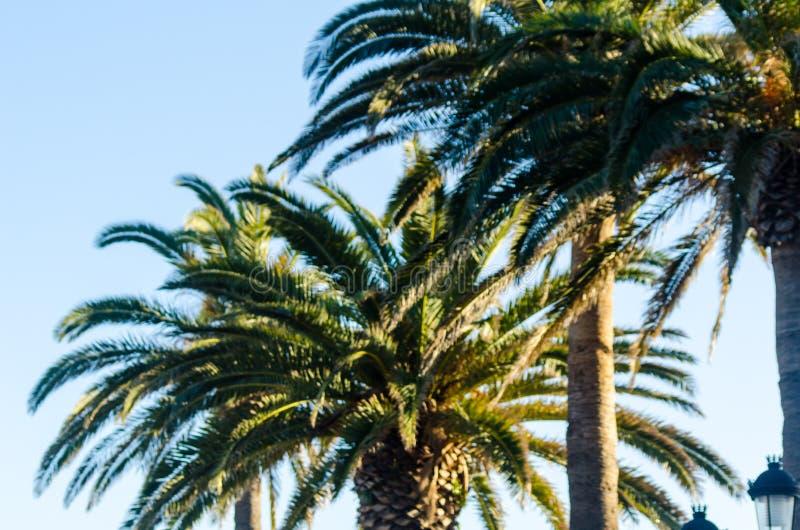 Красивая распространяя пальма, экзотический символ заводов праздников, стоковая фотография