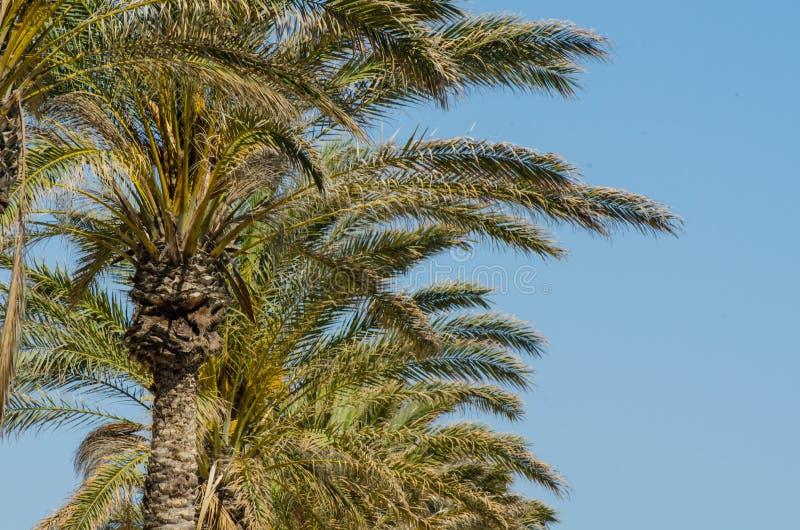 Красивая распространяя пальма, экзотический символ заводов праздников, стоковые изображения