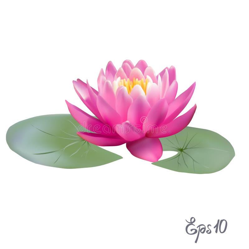 Красивая реалистическая иллюстрация лилии или лотоса иллюстрация вектора