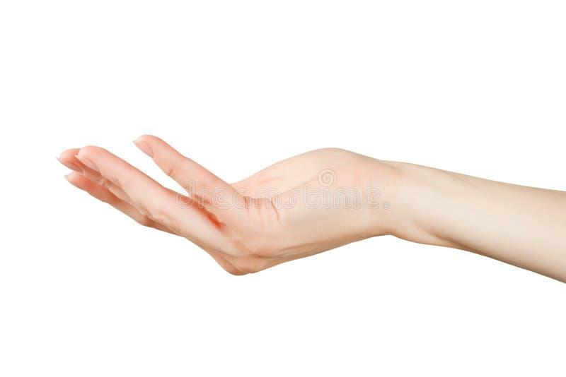Красивая рука женщины держа или показывая что-то стоковое фото