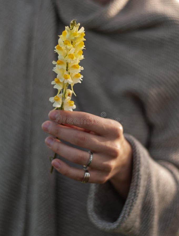Красивая рука с кольцами держа цветок Рука женщины со стильными аксессуарами boho Отсутствие фокуса стоковое фото rf