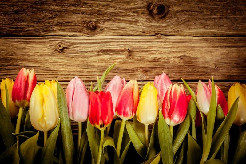 Красивая свежая граница тюльпана на деревенской древесине стоковое фото rf