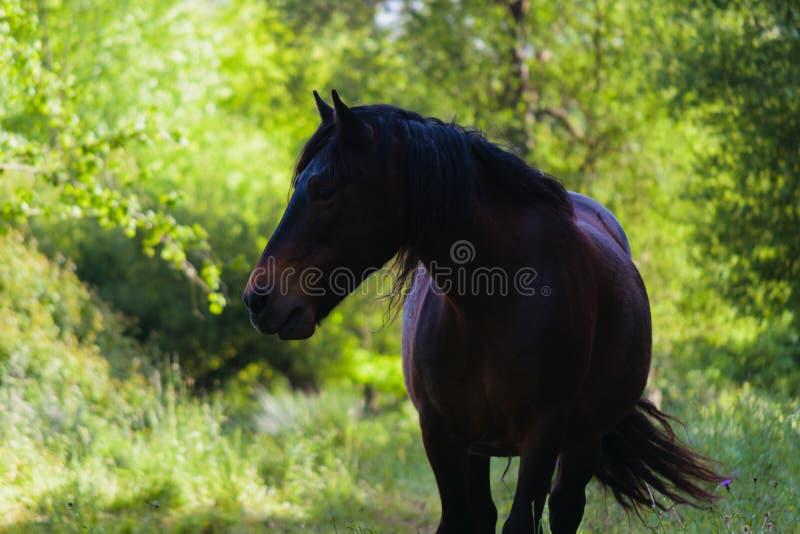 Красивая свободная лошадь против солнца в окружающей среде стоковые изображения rf