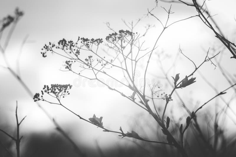 Красивая серая ветвь на ветре стоковые изображения rf