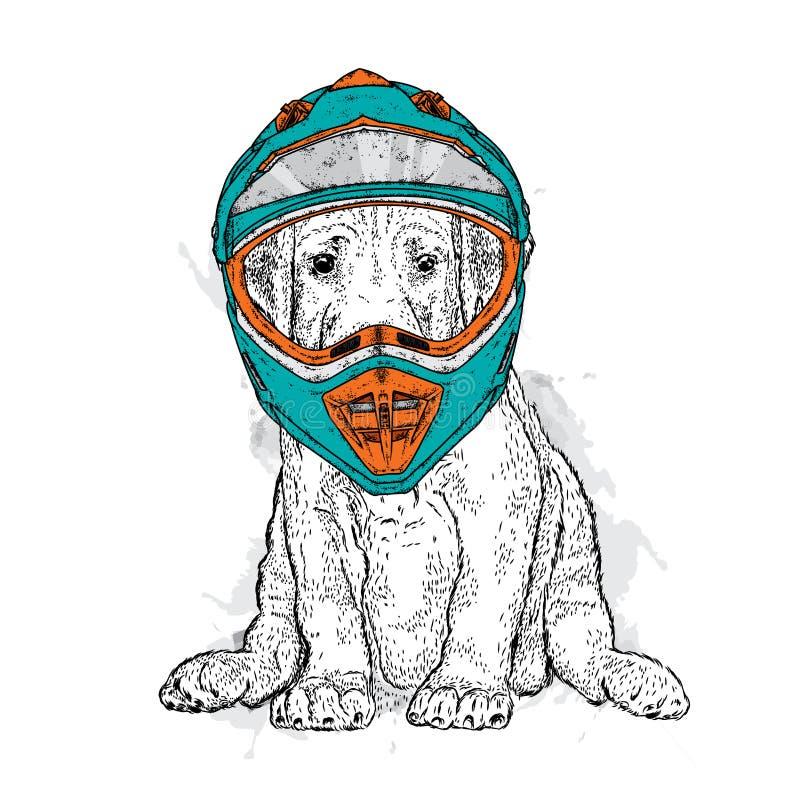 Красивая собака в шлеме мотоцикла Чистоплеменный щенок Vector иллюстрация для открытки или плаката бесплатная иллюстрация