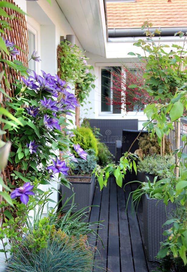 Красивая современная терраса с много цветками стоковые фотографии rf