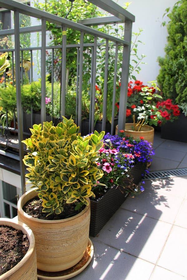 Красивая современная терраса с смешиванием лета цветет стоковая фотография rf