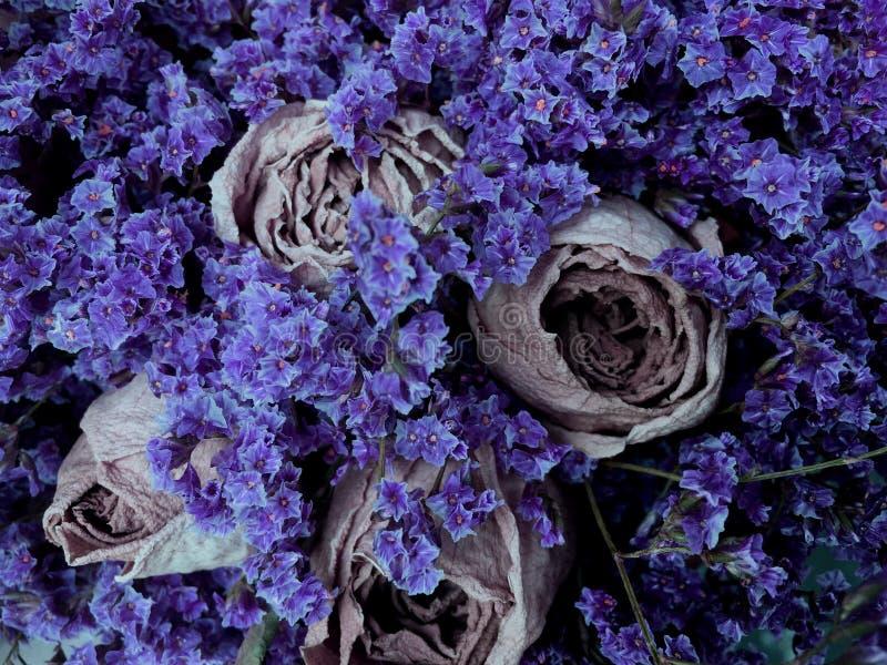 Красивая сухая предпосылка года сбора винограда цветков Букет  стоковая фотография rf