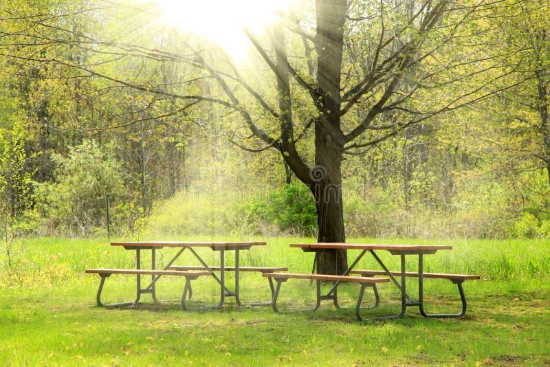 Красивая сцена весны стоковые изображения rf
