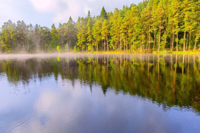 Красивая сцена ландшафта с сосновым лесом отраженным в спокойном lak стоковые фотографии rf