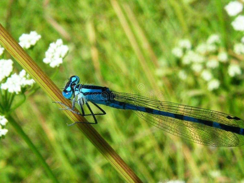 Красивая сцена природы с бабочкой стоковое фото