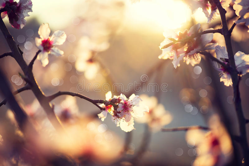 Красивая сцена природы с зацветая деревом стоковые изображения rf