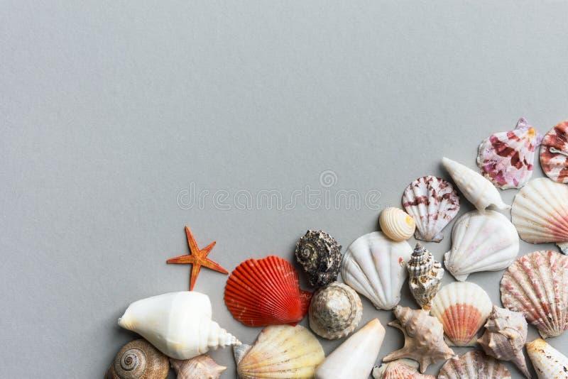 Красивая творческая морская предпосылка лета Раковины моря различных форм и цветов на сером камне стоковая фотография rf