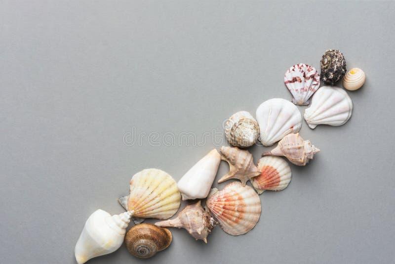 Красивая творческая морская предпосылка лета Раскосный плоский положенный состав от раковин моря различных цветов форм на сером ц стоковые фото