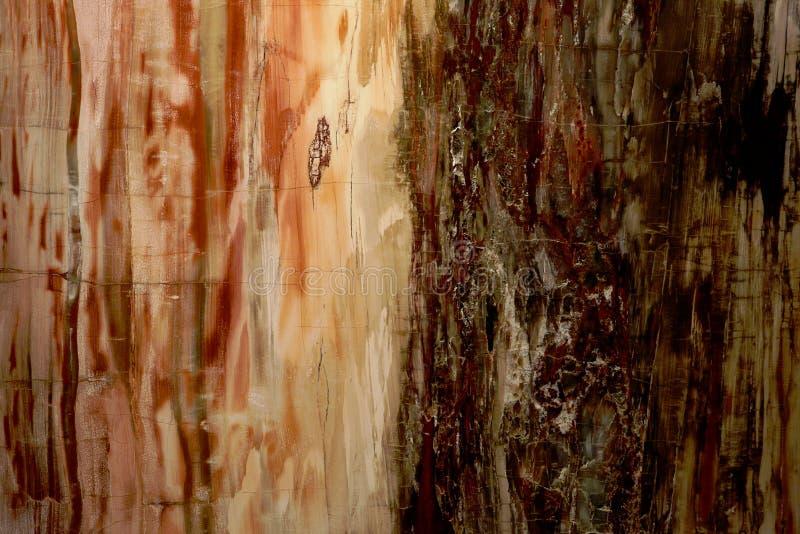 Красивая текстура естественной предпосылки славной древесины окаменелой древесины славной окаменелой в красных и желтых цветах стоковые фото