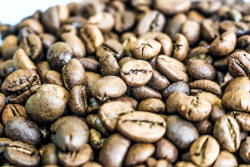 Красивая текстура свежо зажаренных в духовке выбранных очень вкусных богачей коричневеет естественные душистые зерна дерева кофе, стоковое изображение