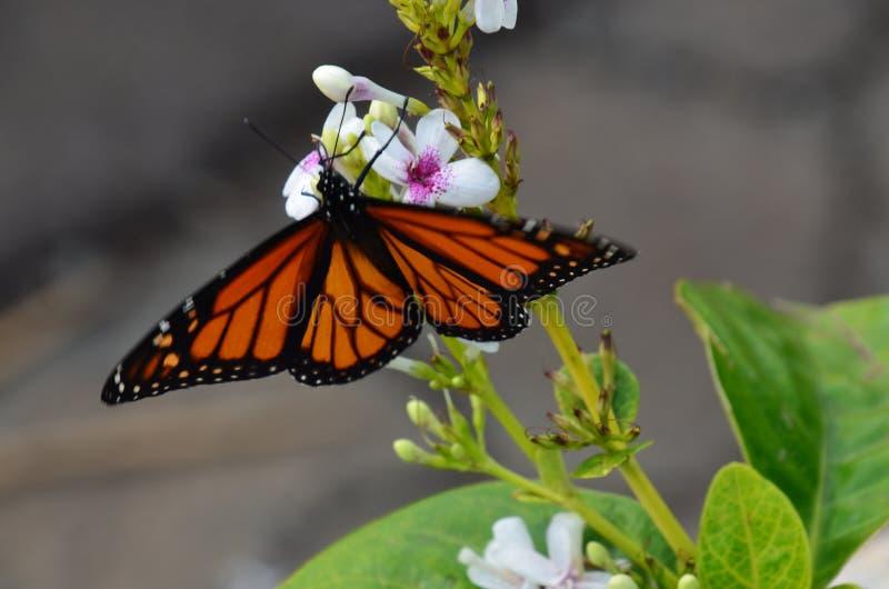 Красивая трава бабочки и цветка зеленая стоковые фотографии rf