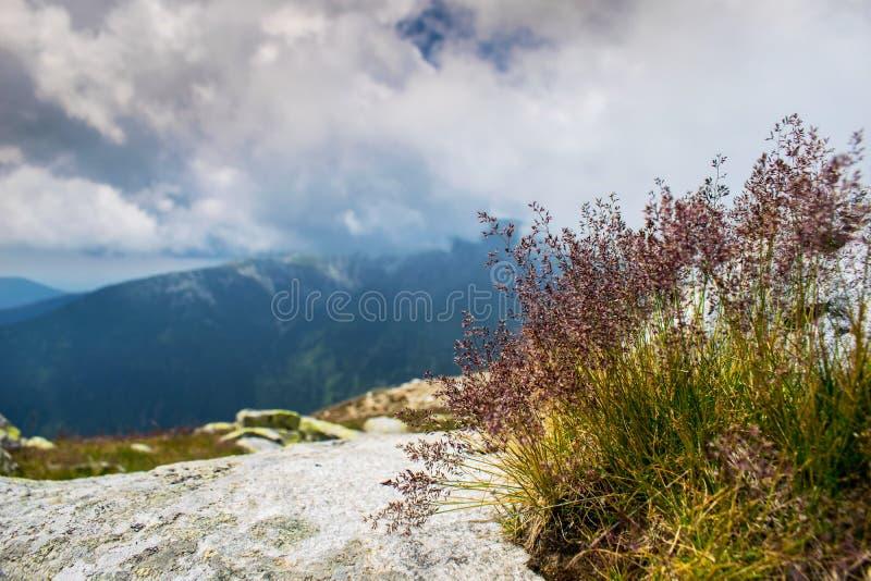 Красивая установка в природе Пряжа травы растя на утесах гор Небо с облаками и горами которые можно увидеть стоковые изображения