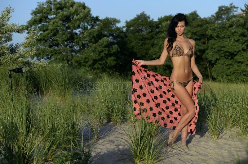 Красивая фотомодель в животном бикини печати представляя на дюнах пляжа стоковая фотография rf