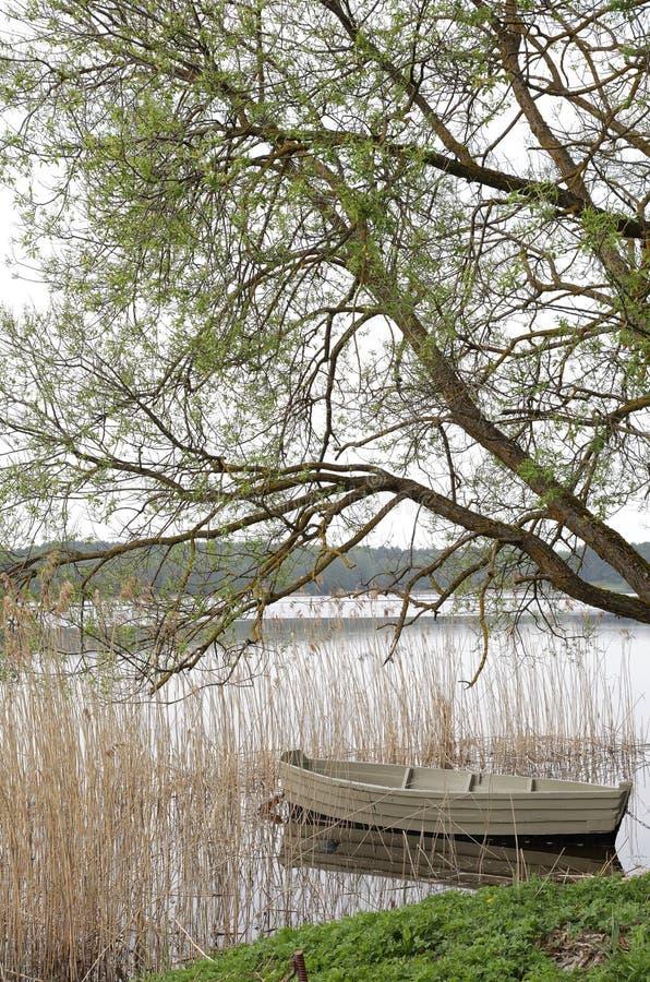 Красивая шлюпка на реке под деревом стоковое изображение rf