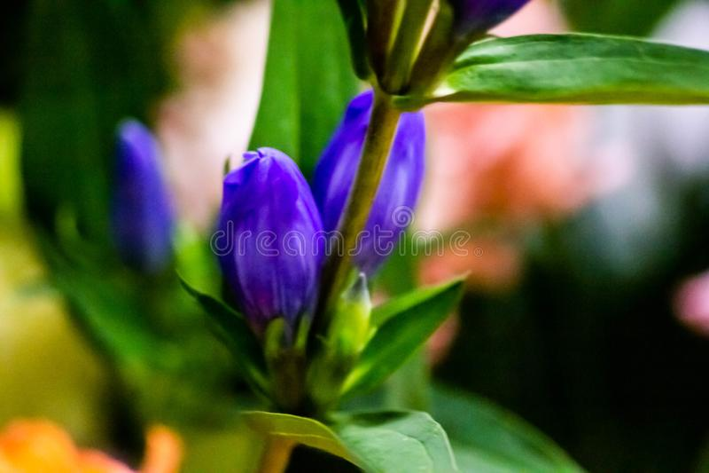 Красивая naturalistic предпосылка с частью голубого цветка с листьями контраст 2 цветов делает изображение фантастический стоковое изображение