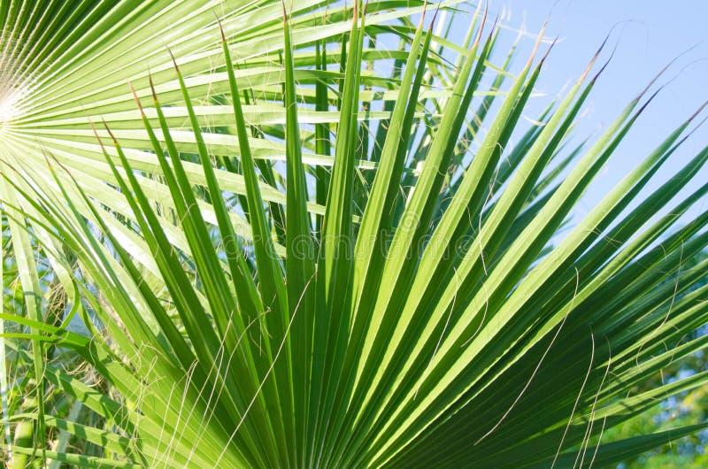 красивейшая ладонь листьев стоковое изображение rf