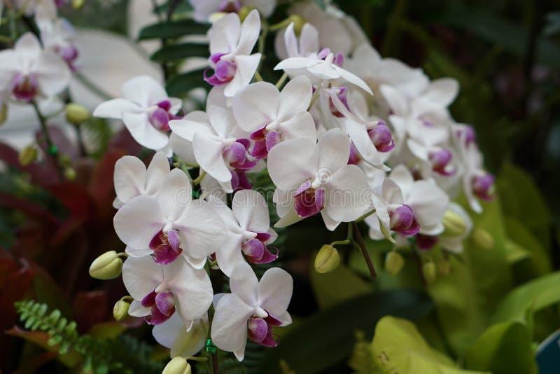 Красивейшая белая орхидея стоковое изображение