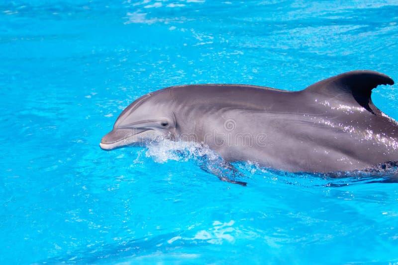 красивейшая вода дельфина стоковая фотография