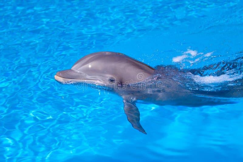 красивейшая вода дельфина стоковое фото rf