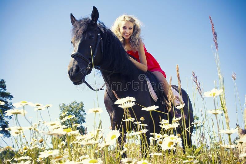 Красотка на лошади стоковое фото