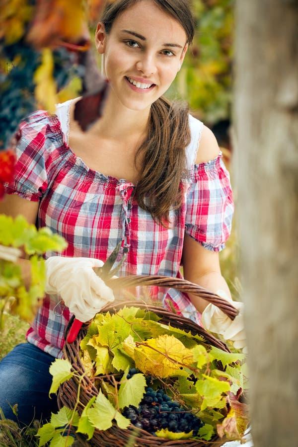 красивейшая женщина виноградника стоковые фотографии rf
