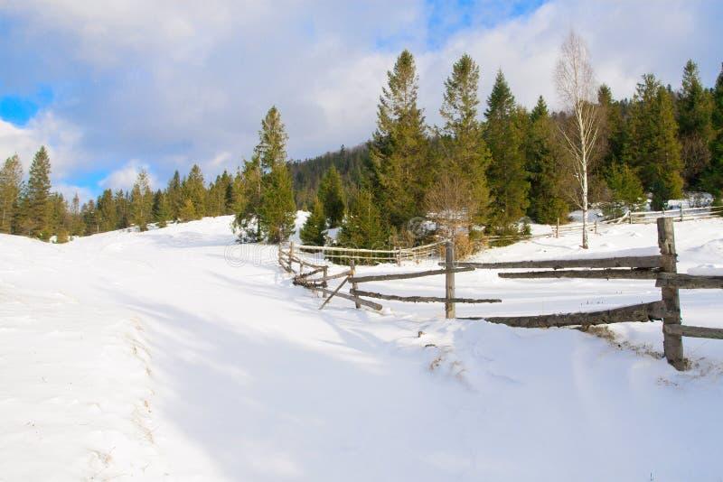 красивейшая зима ландшафта пущи стоковые фотографии rf