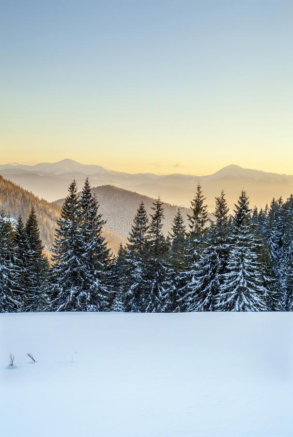 красивейшая зима панорамы Ландшафт с елевыми соснами, голубыми стоковое фото rf