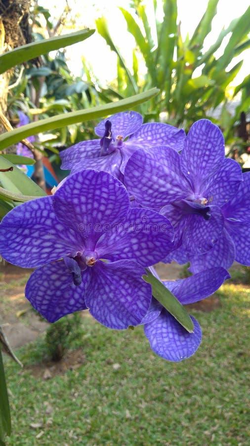 красивейшая орхидея стоковые фото