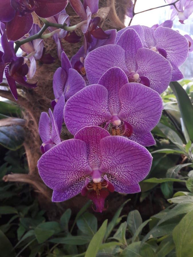 красивейшая орхидея стоковые изображения rf