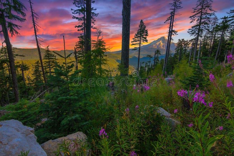 красивейшая перспектива Орегона США держателя клобука стоковое изображение